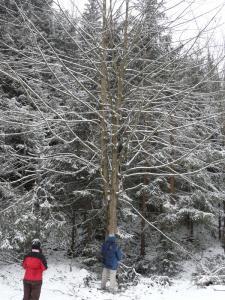 Kermitek za stromem
